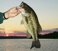 Bass Lake Map Dickinson County Michigan Fishing Michigan Interactive
