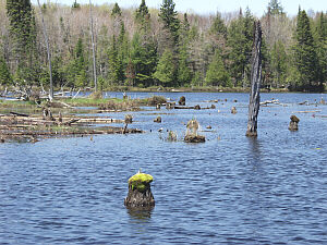 North channel thousand island lake cisco lakes chain for Lake gogebic fishing report