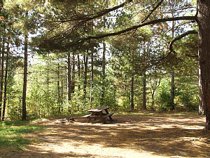 Pigeon River State Forest Pine Grove Campground