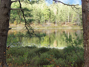 Pigeon River State Forest Round Lake Campground