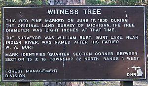 Pigeon River State Forest Witness Tree Cheboygan